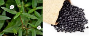 Cách chữa bệnh suy thận bằng đỗ đen và cỏ mực
