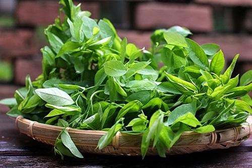 Bồi bổ sức khỏe và tăng cường sinh lý nam giới tự nhiên với rau ngót