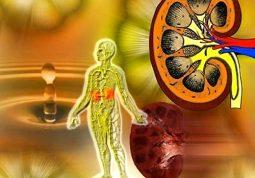 Hội chứng thận hư là dấu hiệu tổn thương ở thận biểu hiện tiểu ra protein, giảm albumin và protein máu, có phù