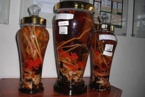 Rượu Thiên khẩu nhất bôi: Bổ thận tráng dương, sinh tinh dưỡng huyết, kéo dài tuổi thọ