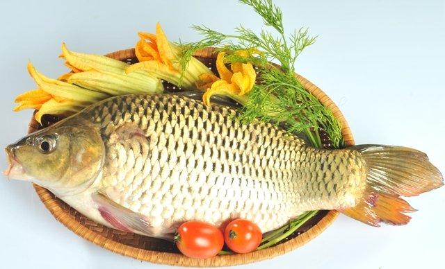 Cá chép - Loại cá trị bệnh yếu sinh lý tốt cho nam giới