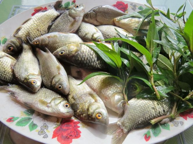 TOP 4 loại cá khắc tinh trị bệnh yếu sinh lý ở nam giới