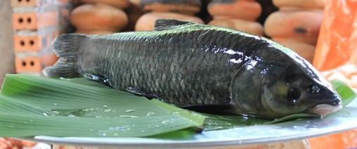 cá trị bệnh yếu sinh lý ở nam giới