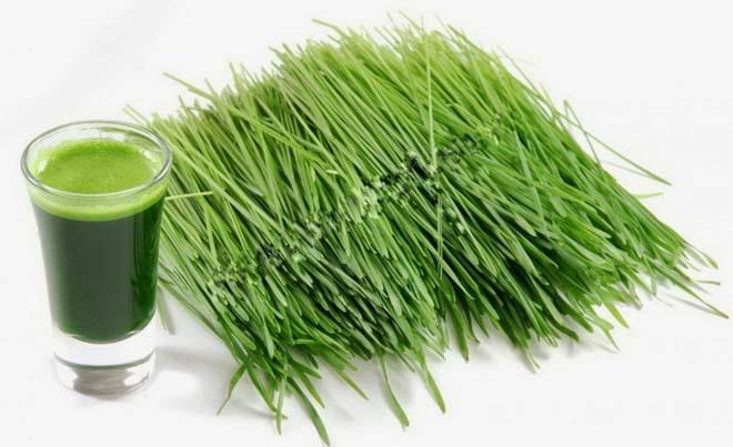 Tự chữa khỏi bệnh liệt dương nhờ rau hẹ trong vườn