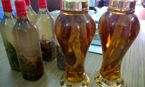 Cách ngâm rượu hải sâm trị yếu sinh lý