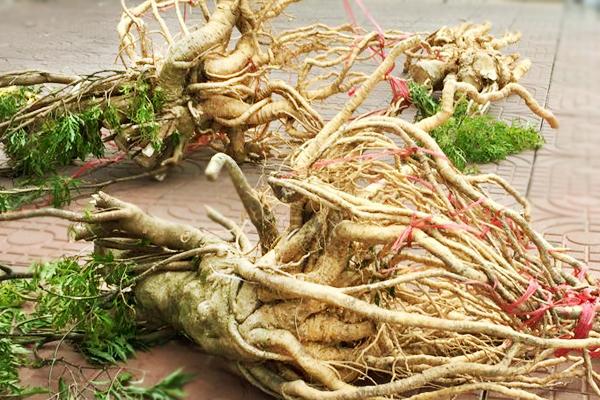Bật mí 3 loại thảo dược tăng cường sinh lý có ở quanh nhà