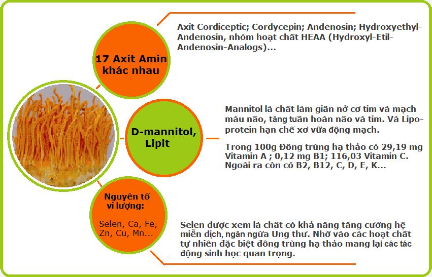 thành phần dinh dưỡng của đông trùng hạ thảo Nhật Bản Royal Gold