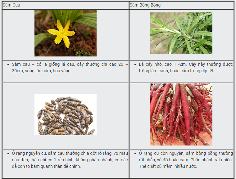 cách phân biệt sâm cau và cây bồng bồng
